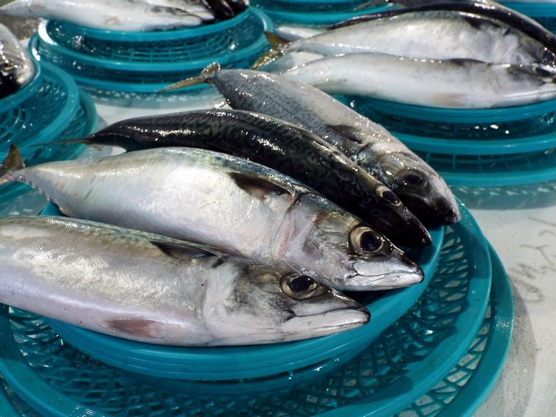 L - Jonahs Fish.jpg